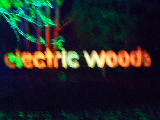 Newport, UK : electric woods