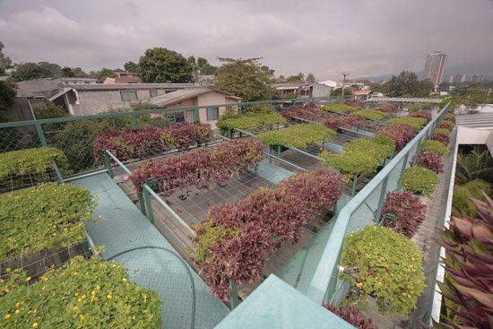 Arbol de Fuego Eco-Hotel: green roof