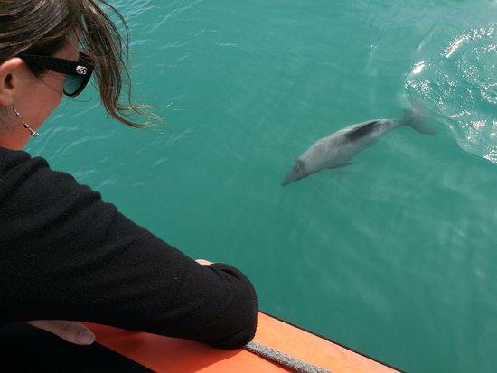 Akaroa, Nueva Zelanda: Close Encounter
