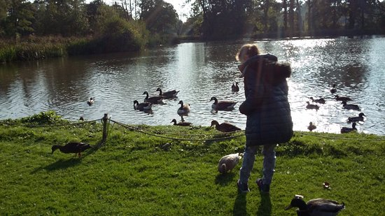 Arlington, UK: Feeding the ducks