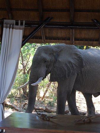 Lower Zambezi National Park, Zambia: photo2.jpg