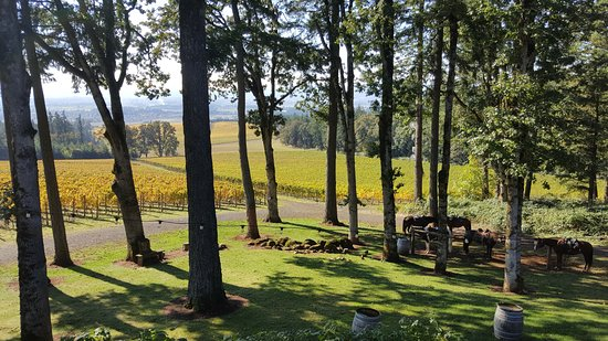 Equestrian Wine Tours: View from a local winery, with the horses in the lower right corner.
