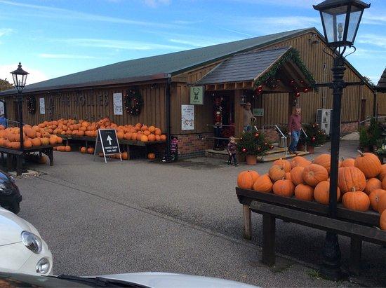 All Stretton, UK: Concept cafe hollies farm shop stretton