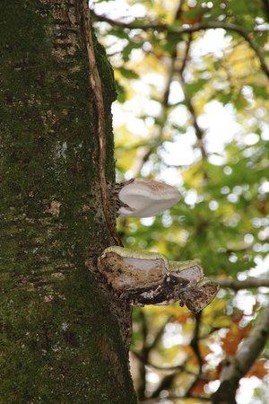 Capel Curig, UK: Woodland / Grounds