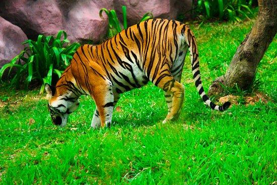 Bannerghatta Biological Park