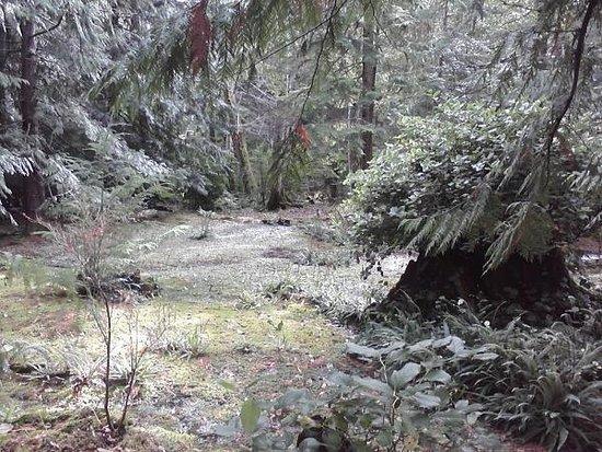 Bloedel Reserve صورة فوتوغرافية