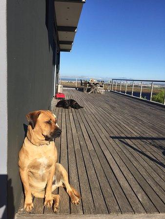 Gordon's Bay, แอฟริกาใต้: Nala and in the background Noura