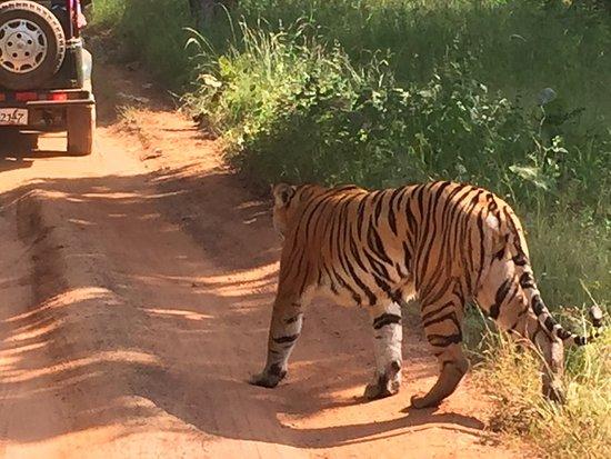 Kolara, India: photo0.jpg