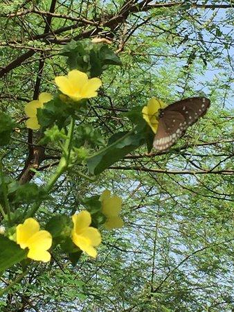 Kolara, India: photo1.jpg