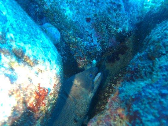 L&J Diving Tenerife: photo7.jpg
