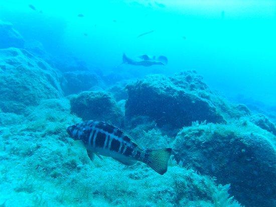 L&J Diving Tenerife: photo8.jpg