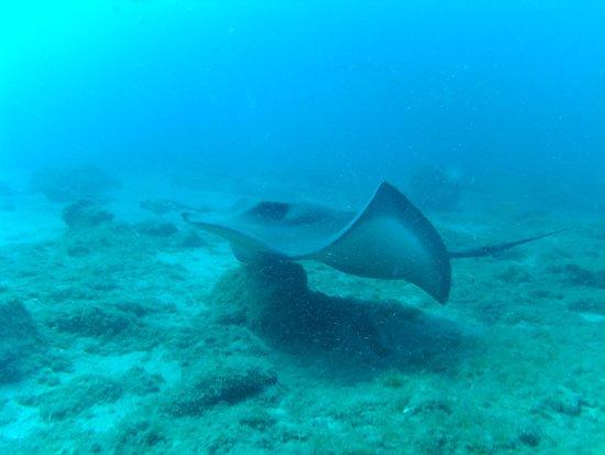 L&J Diving Tenerife: photo9.jpg