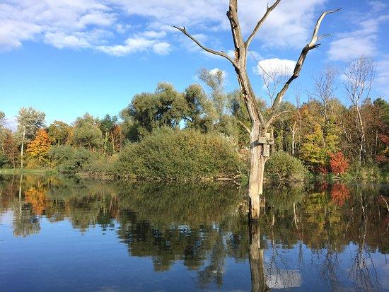 Rheinhausen, Germania: Fast mystische Bilder