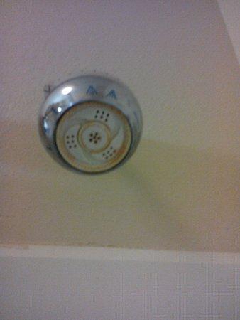 Bloomington, IL: Showerhead