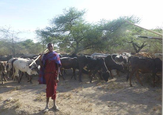 Ndutu Safari Lodge: masaikuddes in de buurt