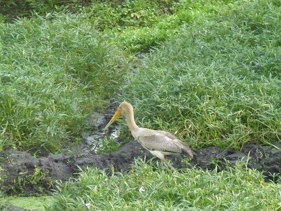 Ryan's Bay Hotel: Tuin achter het hotel met mooie vogels
