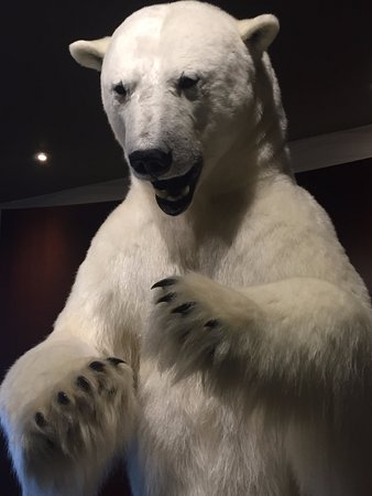 Explorer Hotel: Taxidermy polar bear in the lobby. Quite frightening actually!
