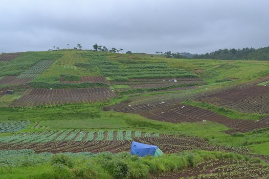 Meghalaya, Indien: Organic farming seen from the road