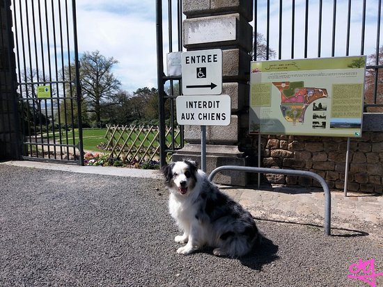 Avranches, Francia: mon chien attaché au poteau d'interdiction tel un chien abandonné :-(