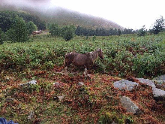 Sare, França: roaming ponies