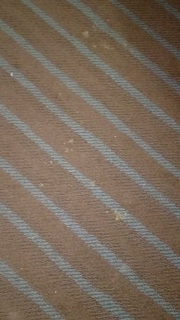 Newport, TN: This was what the floor looked like in a non smoking room... number 224 . Carpets need to be sha