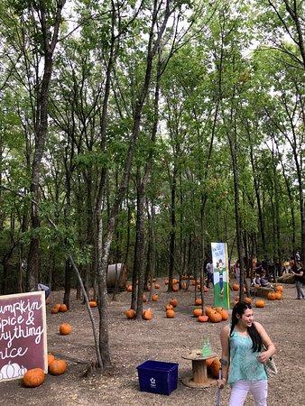 Rockwall, TX: pumpkins