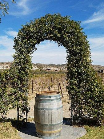 Cottonwood, AZ: Alcantara Vineyards