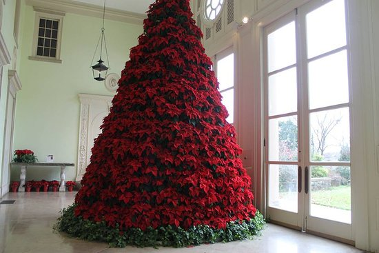 Pointsetta Christmas Tree.Giant Poinsettia Christmas Tree Picture Of Cheekwood Nashville