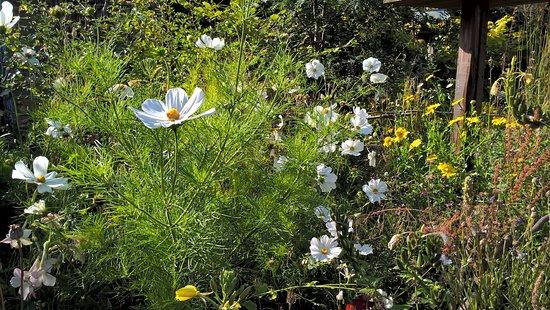 Fylingthorpe, UK: Garden
