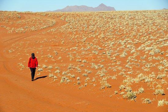 Wolwedans Dune Camp: 2016 08 Namibia (49)_large.jpg