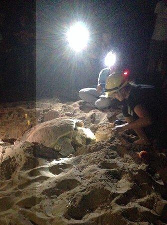 Bundaberg, Australien: Digging her nest