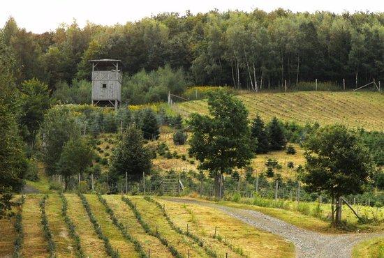 Rheinbrohl, Duitsland: Limesturm (erwanderbar für geübte oder ambitionierte ungeübte Wanderer)
