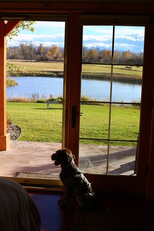 Gallatin River Lodge: Our little happy puppy looking out at the pond outside of our room in the Trout Lodge.