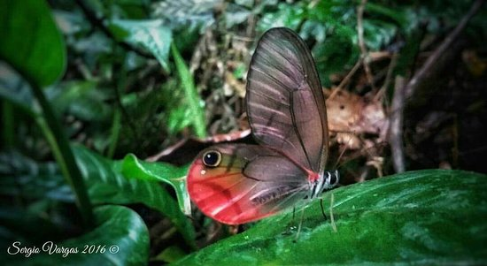 Boca Tapada, Κόστα Ρίκα: Mirador el Pizote