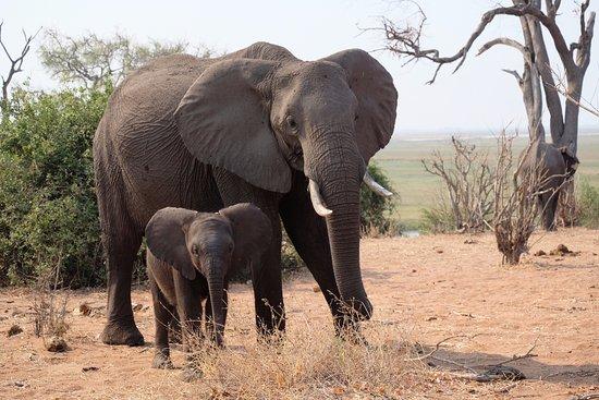 Maun, Botswana: Chobe