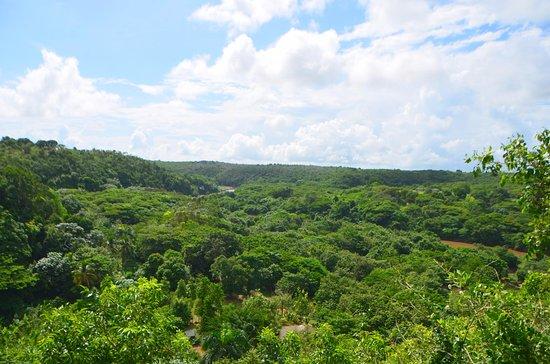 Bayahibe, Dominican Republic: Méga truck