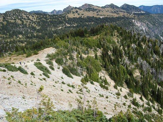 Mount Rainier National Park Picture