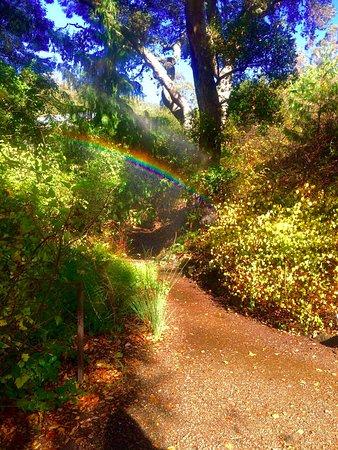 Berkeley, CA: rainbow at uc botanical garden!