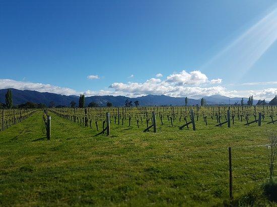 Renwick, Nueva Zelanda: 20161019_091548_large.jpg