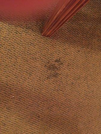 كراون كلوب إن باي إكسبلوريا ريزورتس: photo1.jpg