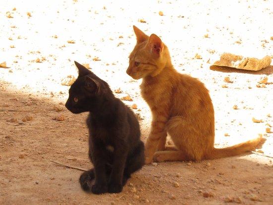 Región de Marrakech-Tensift-El Haouz, Marruecos: More cats