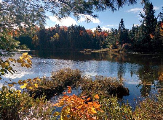 Algonquin Provincial Park, Canadá: Around the lake
