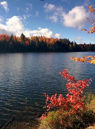 Algonquin Provincial Park, Canada: Some beautiful fall colours