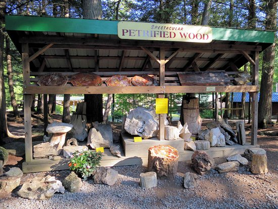 Pottersville, NY: Petrified wood on display near the gift shop
