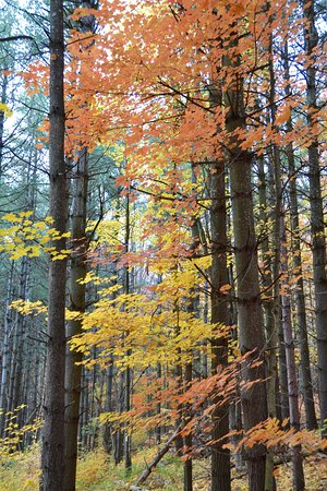 Boyne Valley Provincial Park: Lovely Colours