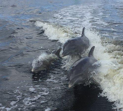 captain jack dolphin tour, matlacha florida