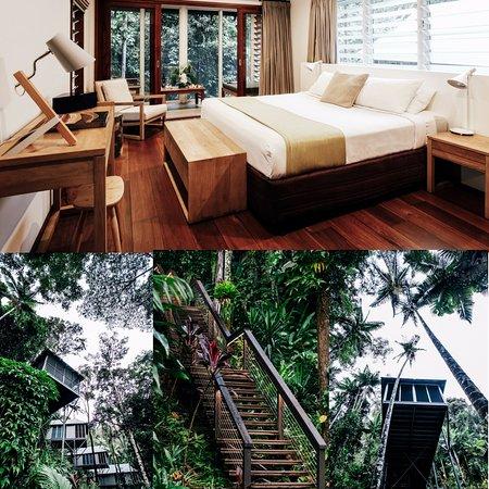 Daintree EcoLodge & Spa: Canopy Bayan