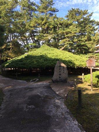 Nakazubansho Garden: photo4.jpg