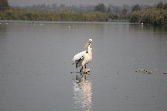 Galilea, Israel: בעלי חיים בשמורה