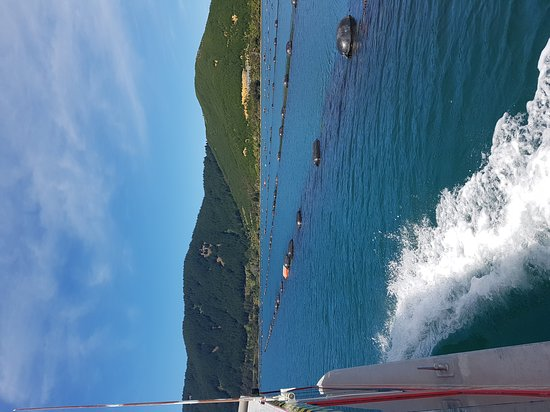 Havelock, Yeni Zelanda: Great day out on the water